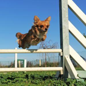 dog sports & activities