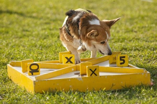 dog training hong kong