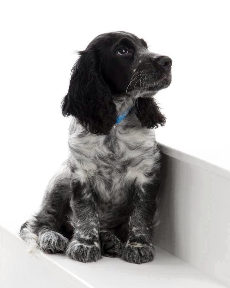 Paws Control Dog Training